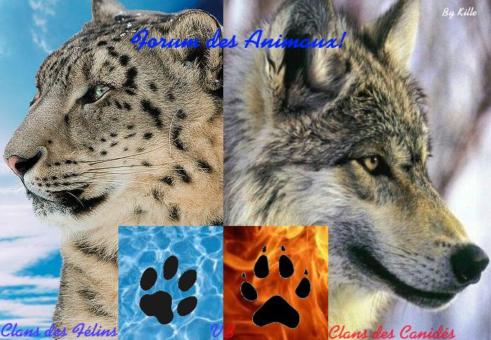 le forum des animaux  Index du Forum